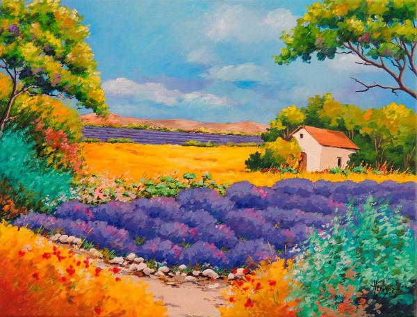 La Provence, Lavande dans le Lubéron