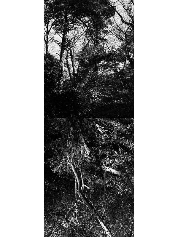 Reflecting landscape 11
