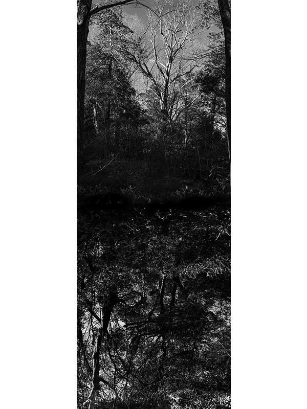 Reflecting landscape 12