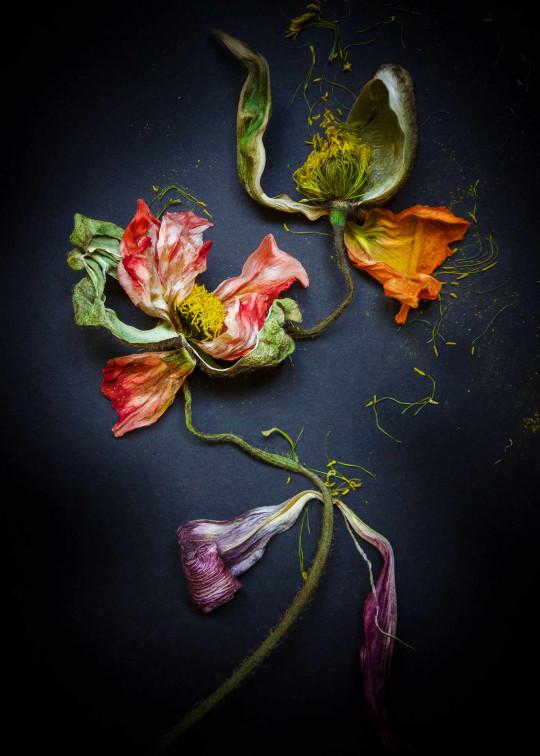 Floraison 1