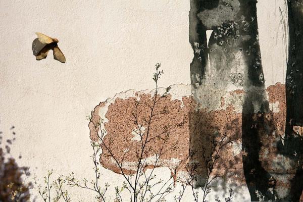 Liona - Faire le mur