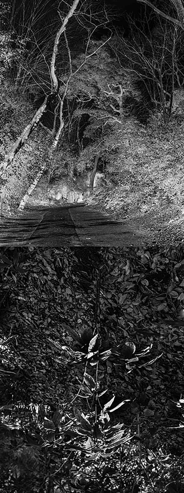 Reflecting landscape 01