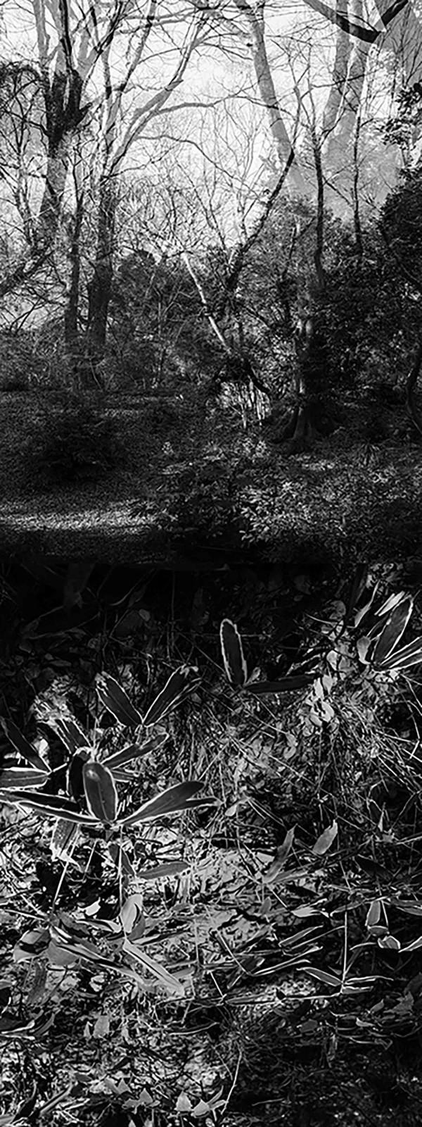 Reflecting landscape 02